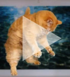 Post image for Everybody Loves A Great Cat Viral Video: the ASPCA Promotes &#8220;Adopt A Shelter Cat&#8221; Month